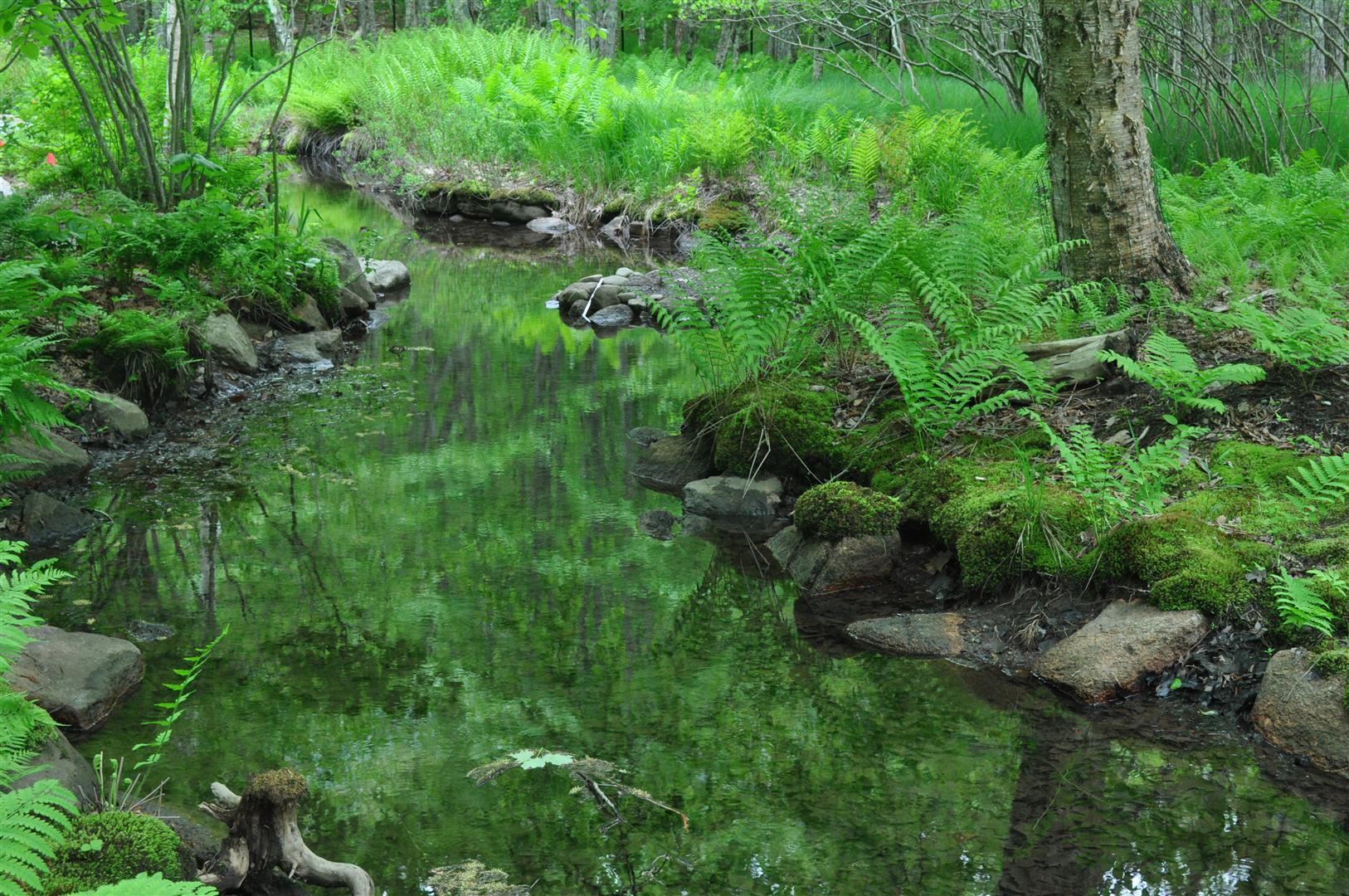 Acadia National Park 6
