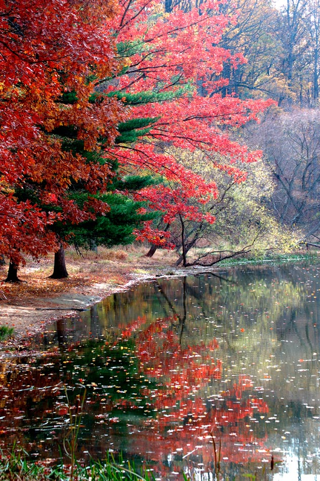 Pine Lake Autumn 2007