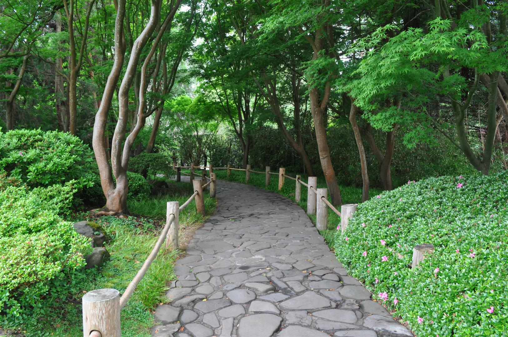 Path, Japanese Tea Garden