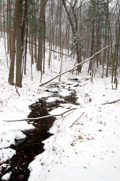 Creek, Winter 2009