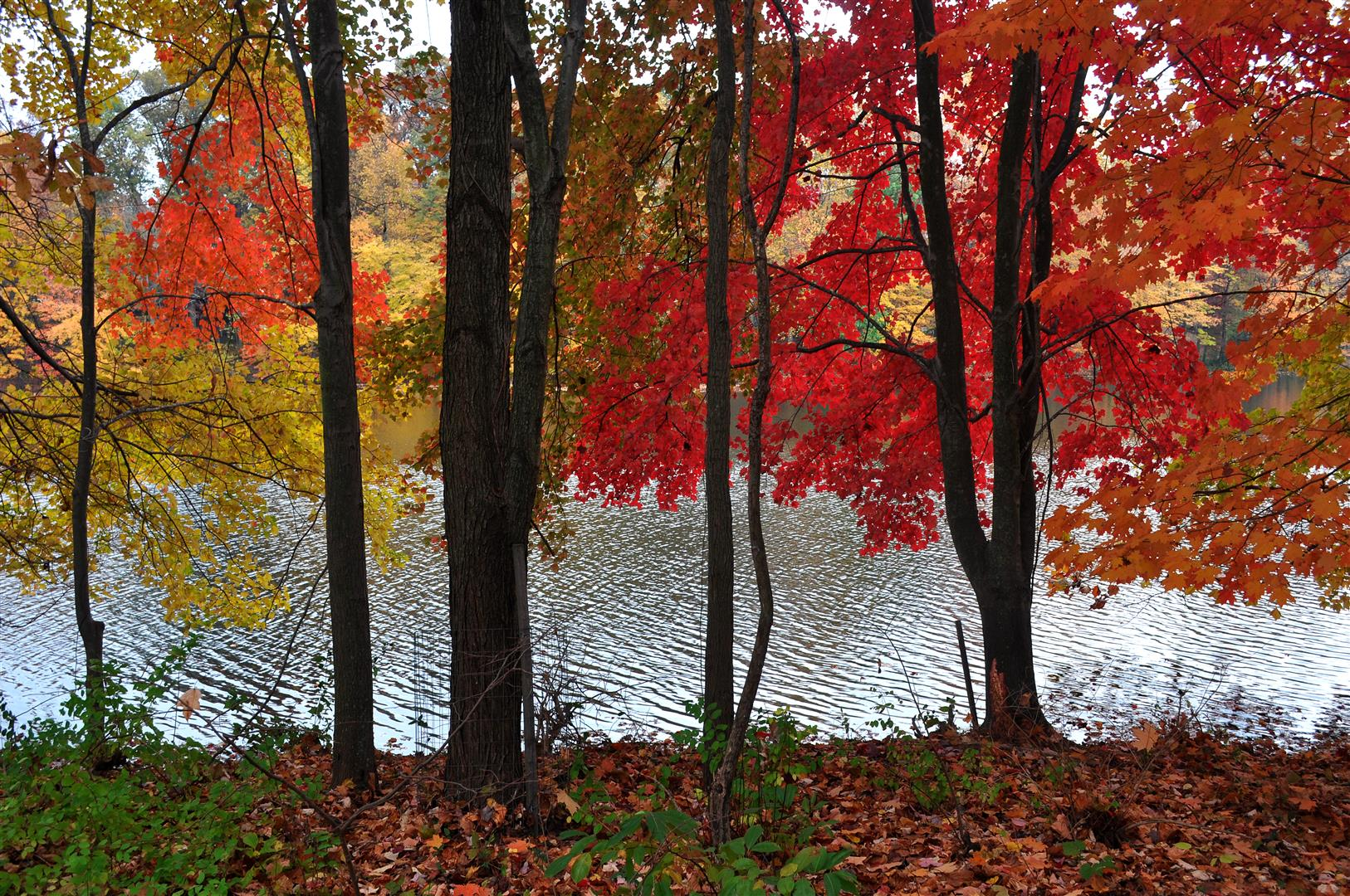 Lake Churchill, Autumn 2013